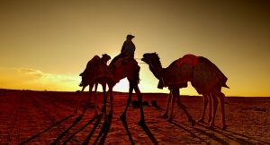 Camels and bedu at sunset