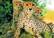 riyadh-zoo-1