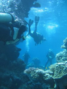yanbu-coral