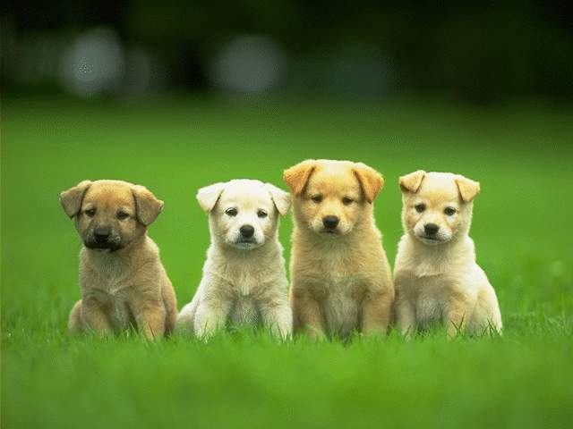 gallery for desktop backgrounds animal life dogs puppy dogs dogs and puppies 640x480