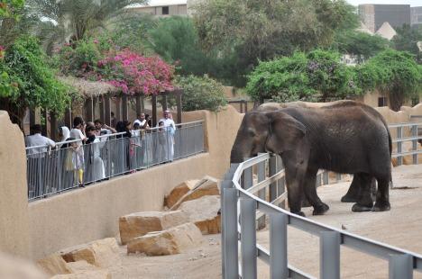riyadh zoo elephant
